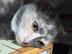 Half and Half Cat