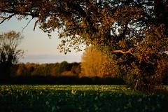 'An October Evening in Norfolk' 5