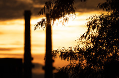 silhouette in sunset-1