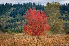 Fall colour in the marsh