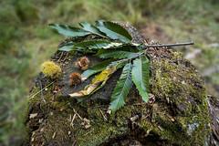 Herbstliche Baumwurzel
