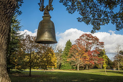 Burmese Bell at Exbury-3048.jpg