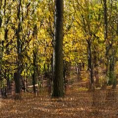 Tree multiple exposure