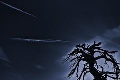 Jet Trails & Barren Tree