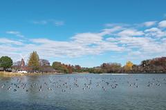 浮間公園の休日 Ukima Park Holiday