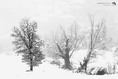 Dopo la neve 3