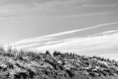 Dune en hiver (Coxyde)