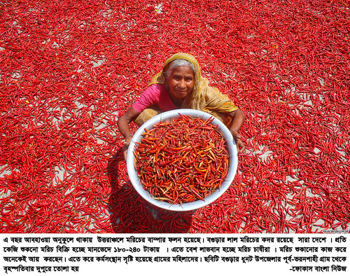 01-04-21-Bogra_ Red Pepper-5