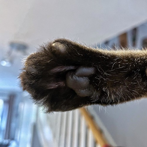 Today is all about...high five that I've done a week's work in 2 days!
