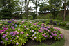 Photo:Hydrangea Garden at the Castle By