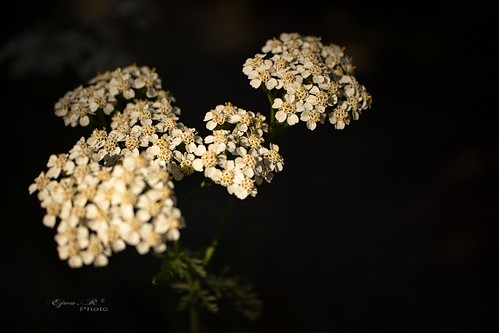autumn flower lights