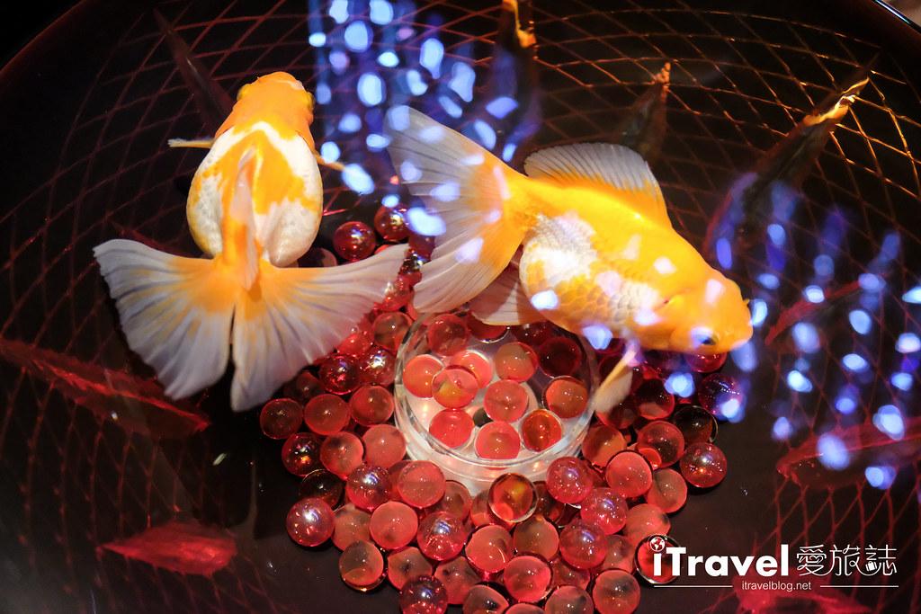 福岡展覽推薦 博多金魚の祭 (53)