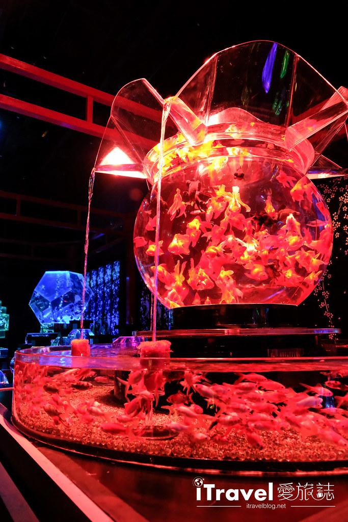 福岡展覽推薦 博多金魚の祭 (39)