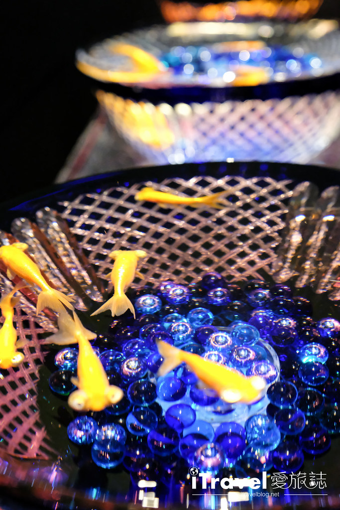 福岡展覽推薦 博多金魚の祭 (57)