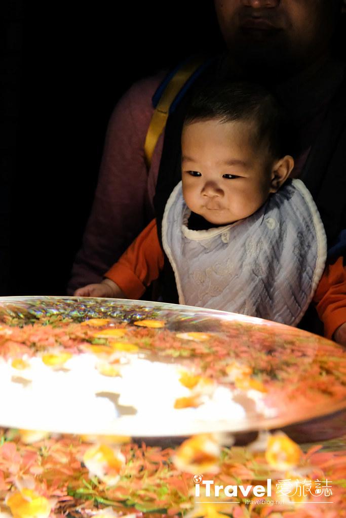 福岡展覽推薦 博多金魚の祭 (13)