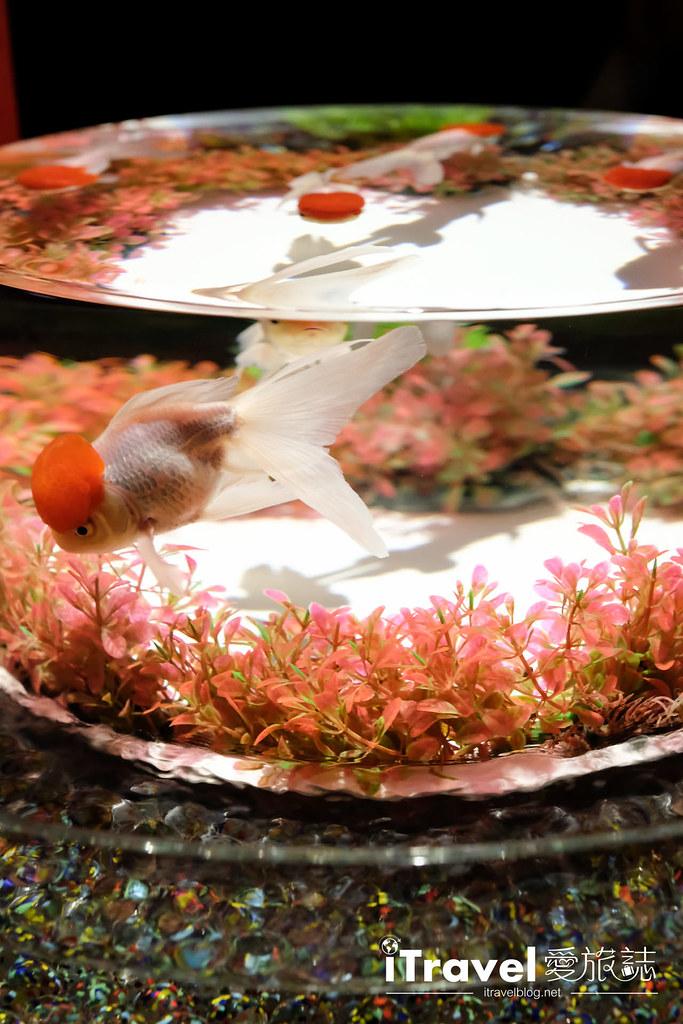 福岡展覽推薦 博多金魚の祭 (9)