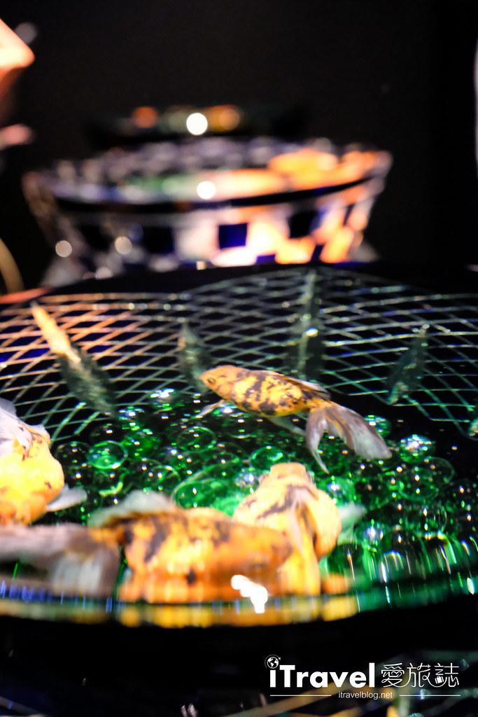 福岡展覽推薦 博多金魚の祭 (56)