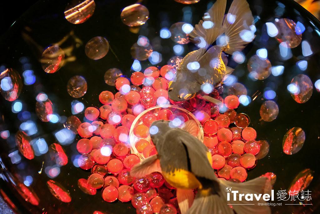 福岡展覽推薦 博多金魚の祭 (54)