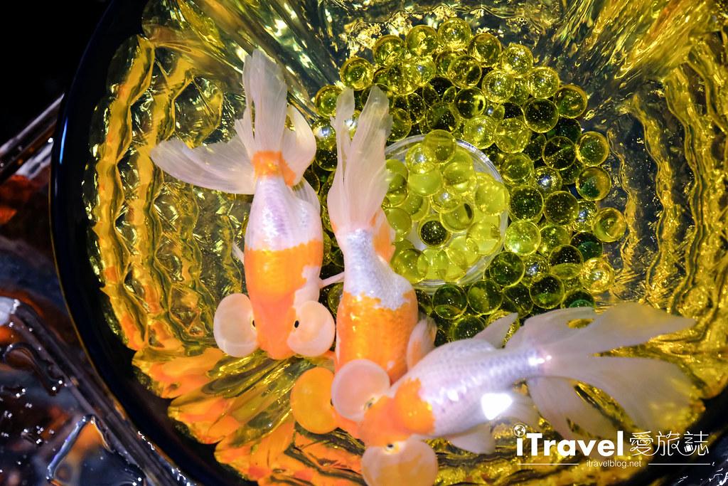 福岡展覽推薦 博多金魚の祭 (51)