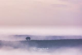 Niebla en el Campo. 08-02-20