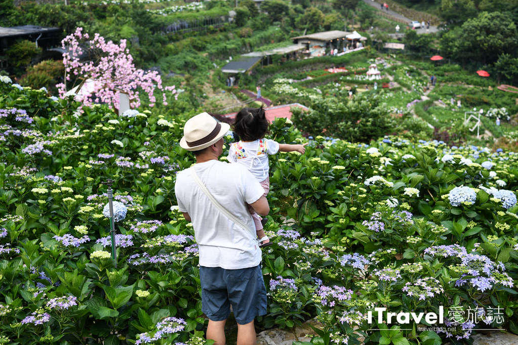 大梯田花卉生態農園 Taipei Hydrangea Terraced Fields (32)