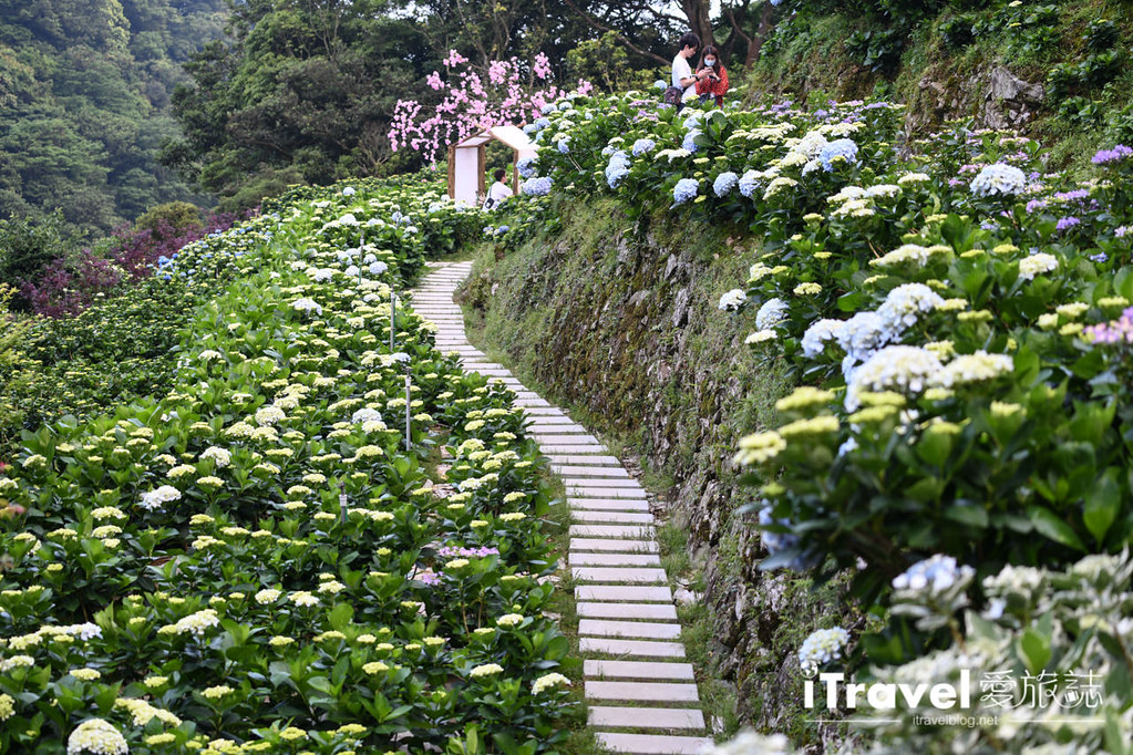 大梯田花卉生態農園 Taipei Hydrangea Terraced Fields (41)