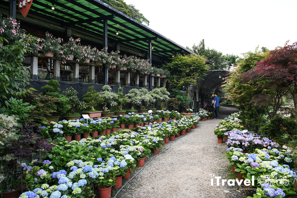 大梯田花卉生態農園 Taipei Hydrangea Terraced Fields (74)