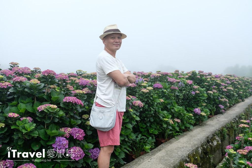頂湖財福繡球花園 Jai Fu Garden (60)