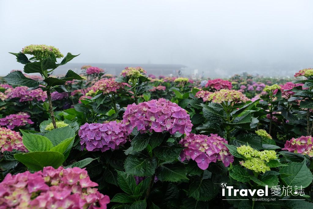 頂湖財福繡球花園 Jai Fu Garden (37)