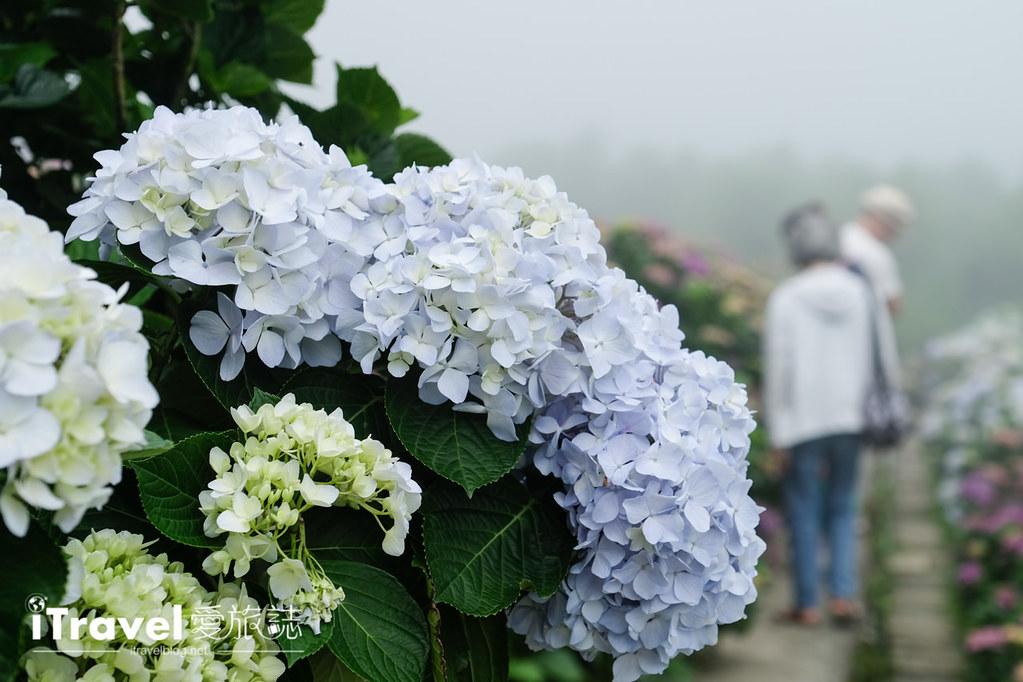 頂湖財福繡球花園 Jai Fu Garden (63)