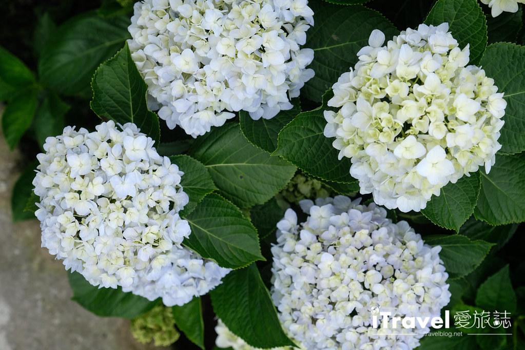 頂湖財福繡球花園 Jai Fu Garden (57)