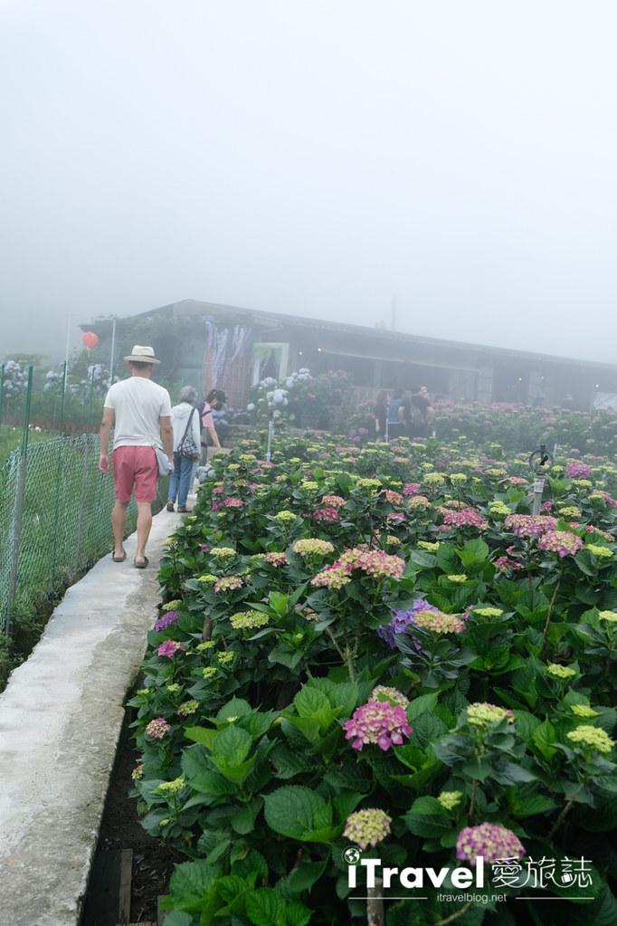 頂湖財福繡球花園 Jai Fu Garden (56)