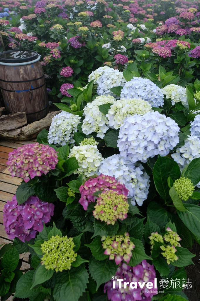 頂湖財福繡球花園 Jai Fu Garden (41)