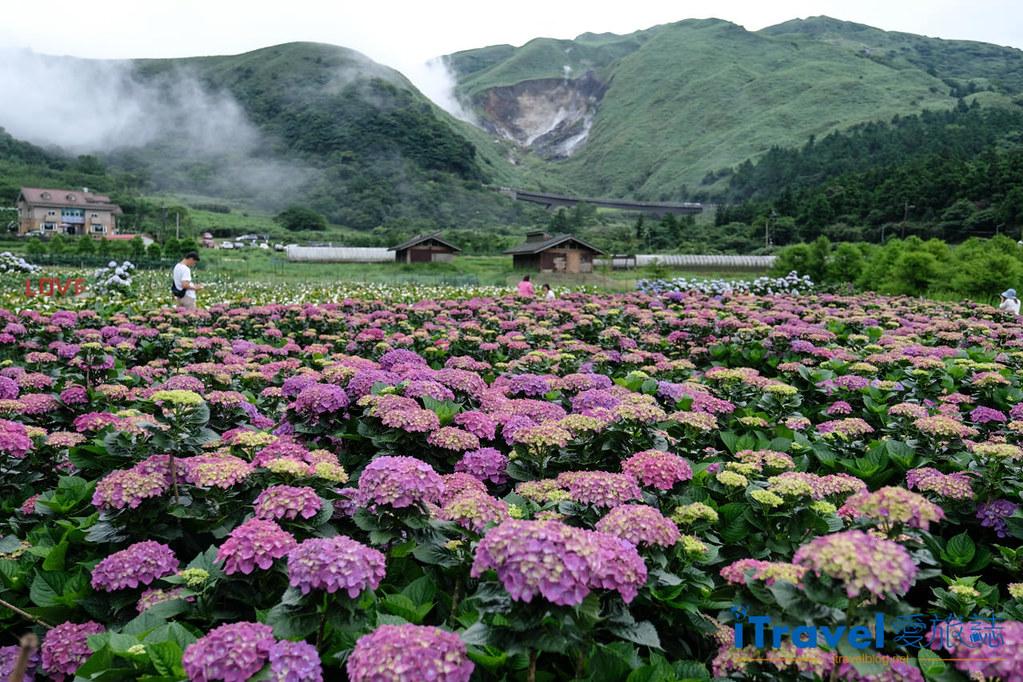 頂湖財福繡球花園 Jai Fu Garden (1)