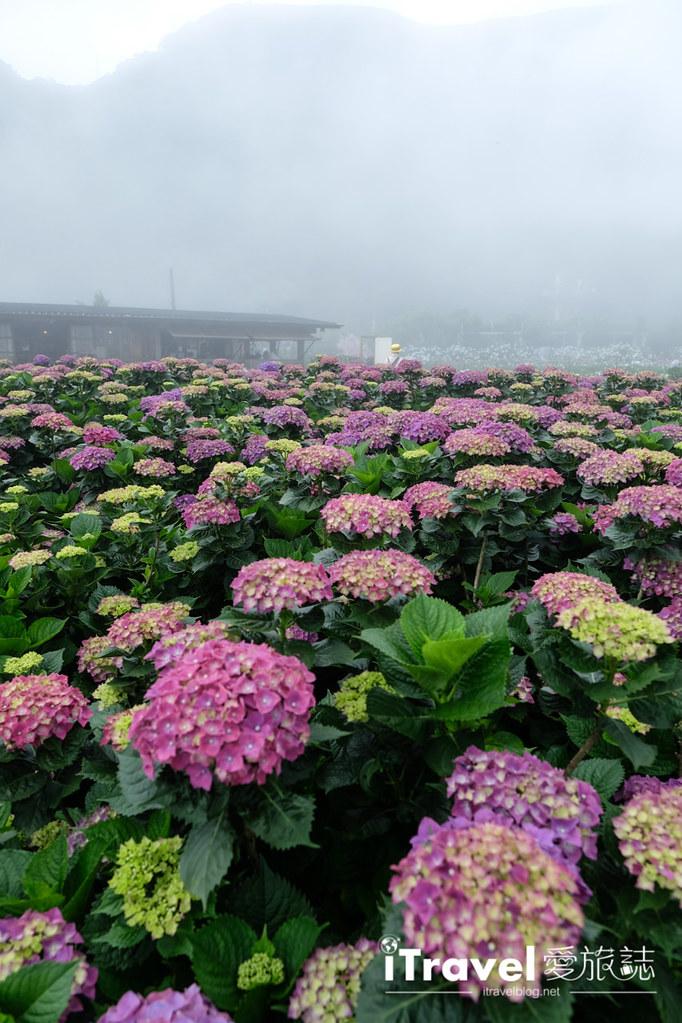 頂湖財福繡球花園 Jai Fu Garden (69)