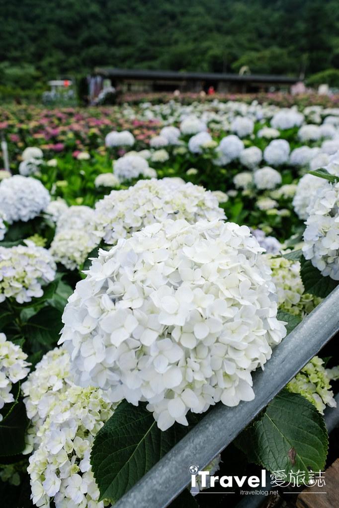 頂湖財福繡球花園 Jai Fu Garden (53)