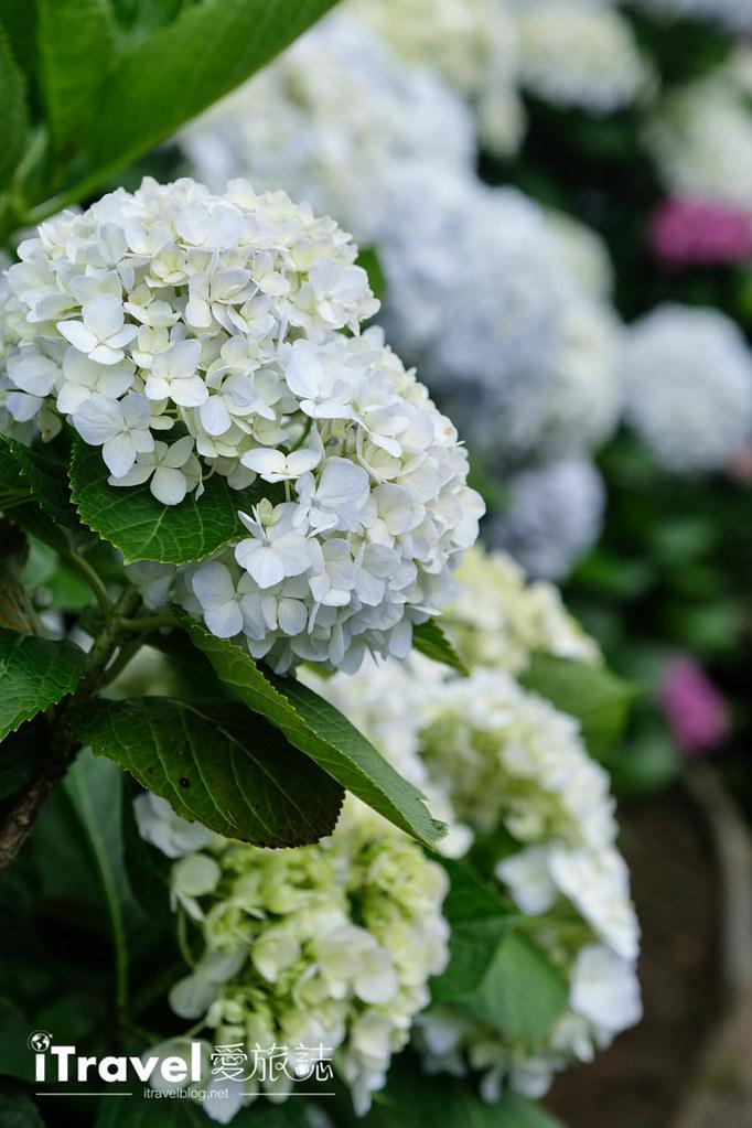 頂湖財福繡球花園 Jai Fu Garden (46)