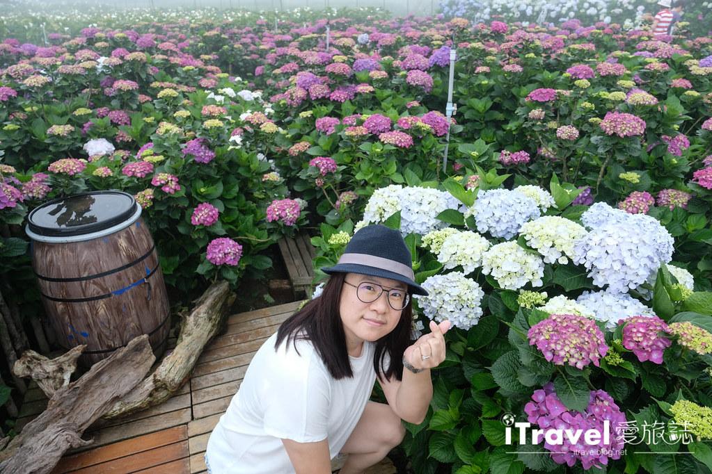 頂湖財福繡球花園 Jai Fu Garden (42)