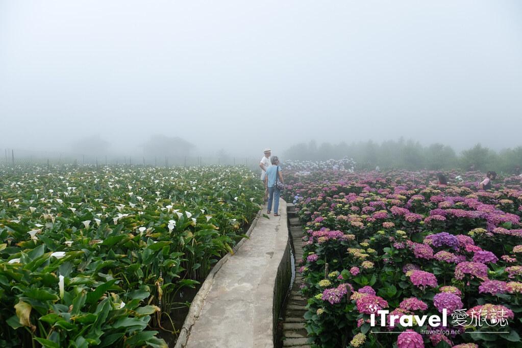 頂湖財福繡球花園 Jai Fu Garden (28)