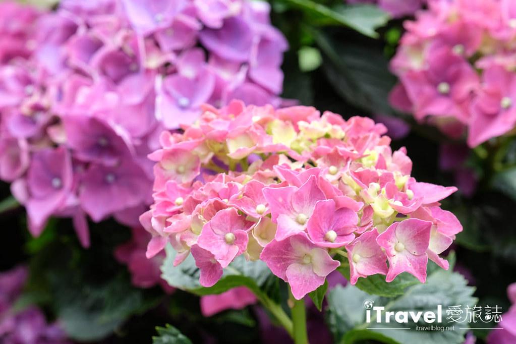 頂湖財福繡球花園 Jai Fu Garden (18)