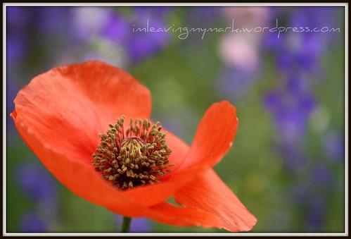 WM Spring Flowers 3
