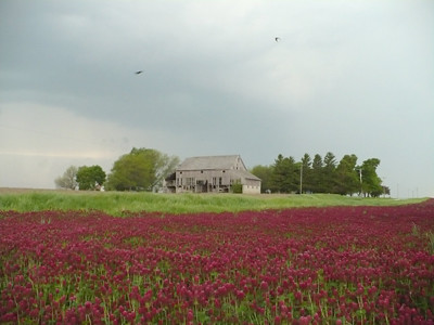 20110806_red_clover0_photo