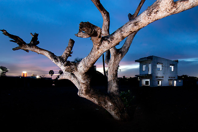 Dying Tree and House