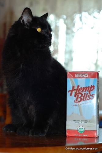 hempbear 9-28-2011 7-13-56 AM