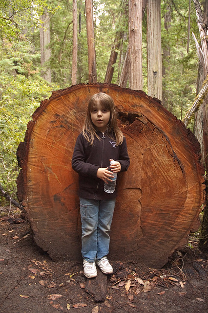 Big Basin Brae Shorter then Tree Width