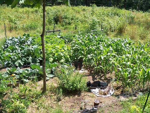 mid july garden