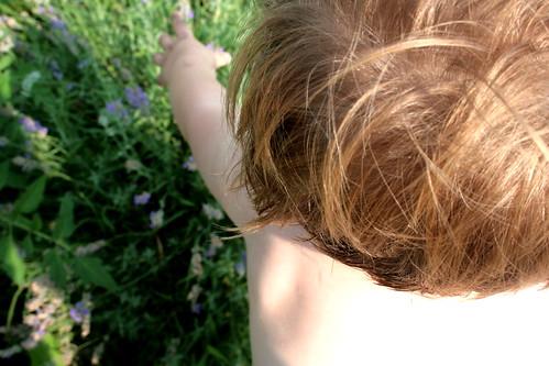 summer hair and the lavender bush