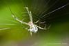 20110801 Tiny spider in garden