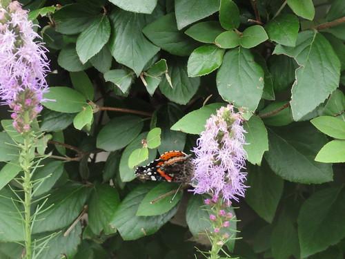 117/365 Butterfly