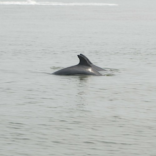 two dolphins, fins peeking out of the water